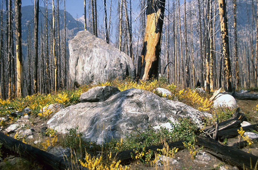 Glacial erratics near Taggart Lake.